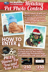 Holiday-Pet-Photo-Contest---LandingPage