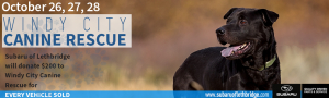 HomePage_Slider_DogDays